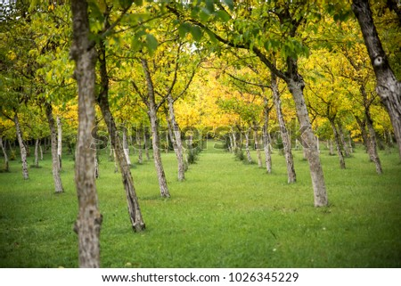 forest of trees in the autumn
