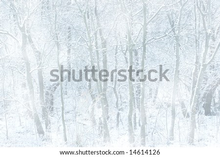 Forest on a snowy day, great background. - stock photo