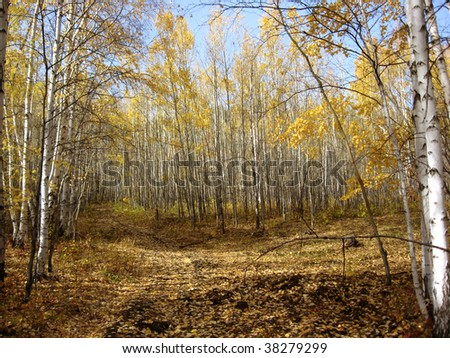 Forest on autumn