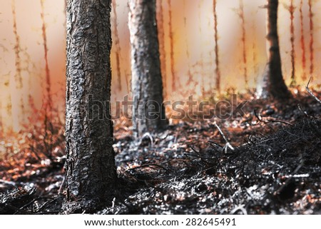 Forest on fire, with scorched trees and black ash in foreground - stock photo