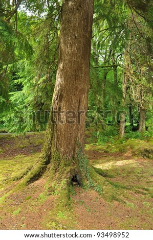 Forest on the beara peninsula, co Kerry, Ireland - stock photo