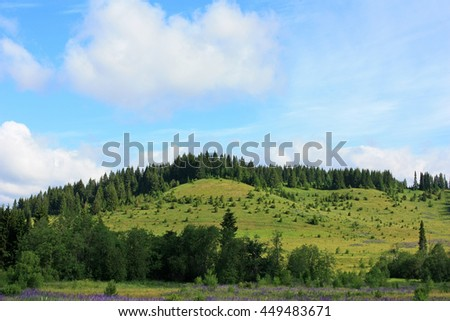 Forest on the hill