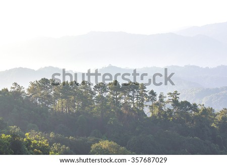 Forest Overview with Fog - stock photo