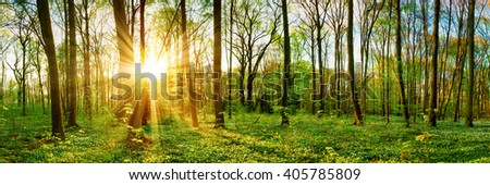 Forest panorama in spring with sunbeams - stock photo