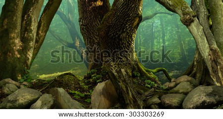 Forest panorama landscape with old mossy crooked trees and rocks - stock photo
