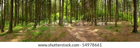 Forest panorama, spring time - stock photo