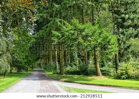 Forest parc roads and trees in summer day - stock photo