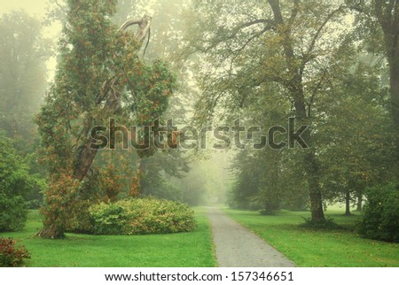 Forest park footpath and trees in morning fog - stock photo