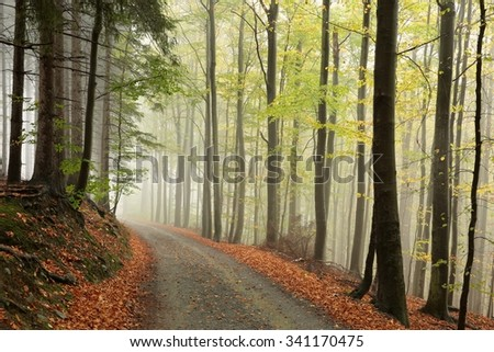 Forest path in foggy autumn weather. - stock photo