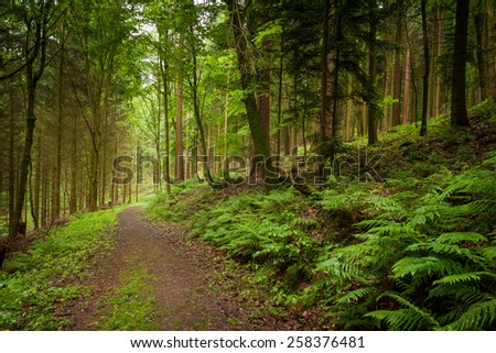 Forest path in Heidelberg, Germany