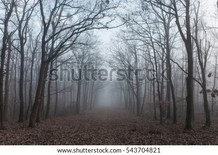 Forest path in mysterious fog