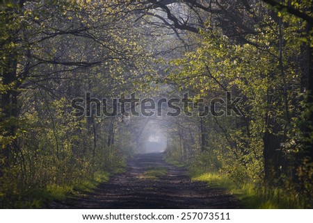 Forest path in spring - stock photo