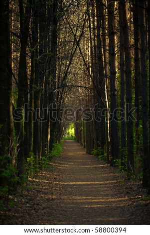 Forest path in the evening. - stock photo
