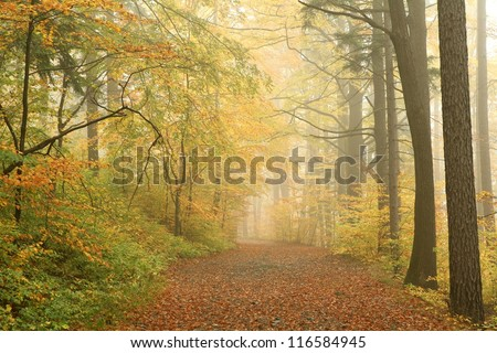 Forest path on a misty autumn morning. - stock photo