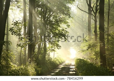 Forest path on a misty spring morning just after the rain. - stock photo
