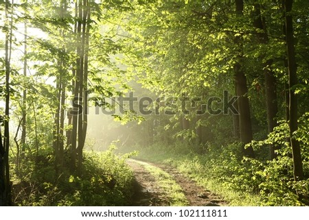 Forest path on a sunny May morning. - stock photo
