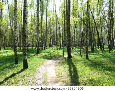 forest path on green meadow