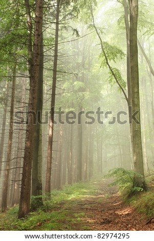 Forest path on the border between coniferous and deciduous trees. - stock photo