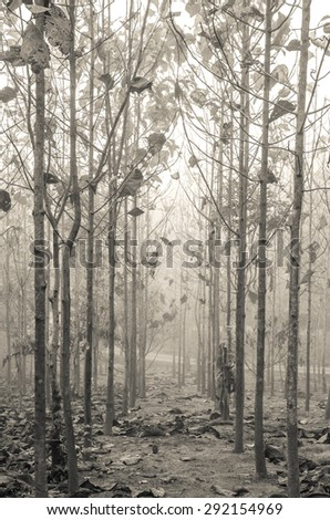 Forest path on the border between coniferous-Vintage - stock photo