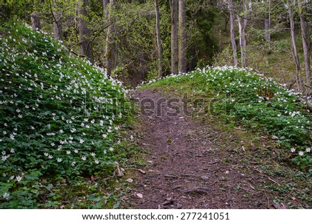 Forest path surrounded by wildflowers in spring - stock photo