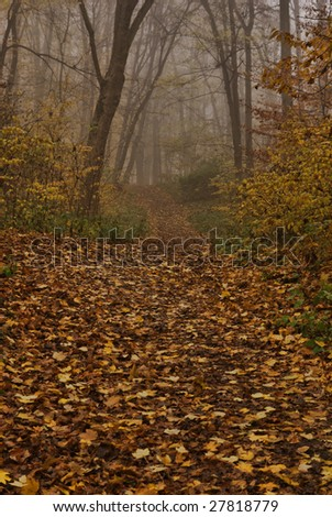 Forest path through the mysterious scenery