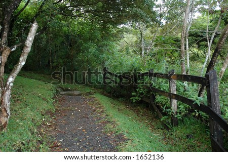 Forest path with wood fence