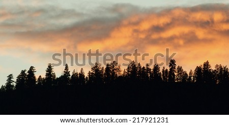 Forest pine trees silhouette against colorful clouds at sunset Flathead Indian Reservation,  Rocky Mountains, western Montana great background with room for text coniferous woodland woods environment