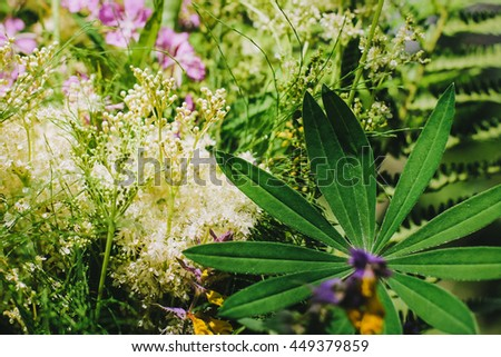 forest plants and flowers