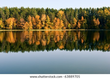Forest reflected in a pond natural background - stock photo