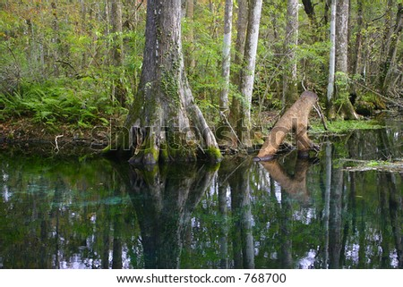 Forest - reflection of trees in clear river water