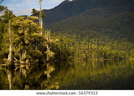 Forest reflections on lake edge