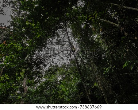 Southeast asian rain forest 3012 accept. opinion