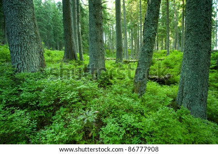 forest reserves - stock photo