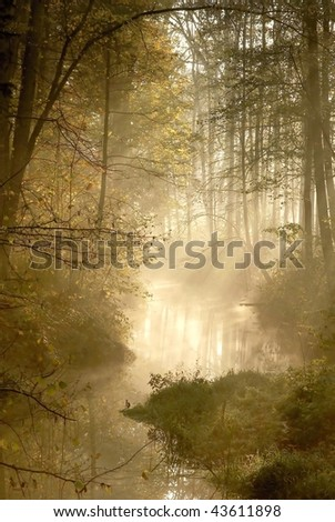 Forest river with mist floating over the water in the early morning. - stock photo