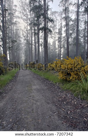 Forest Road - stock photo