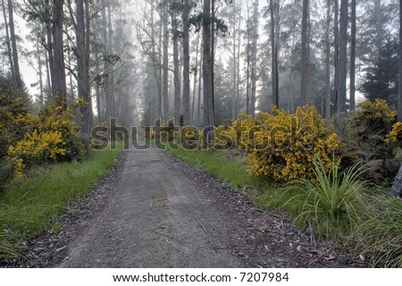 Forest Road 1 - stock photo