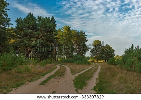 Forest road at sunset - stock photo