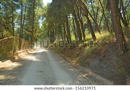 forest road dust - stock photo