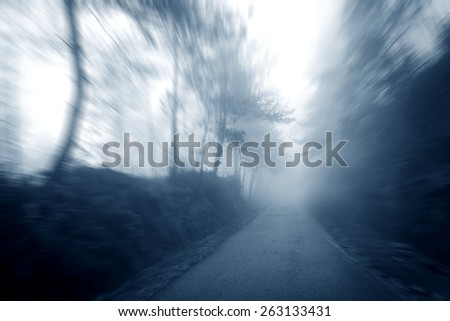 Forest Road, fog - stock photo