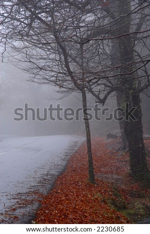 forest road in a dark foggy day - stock photo