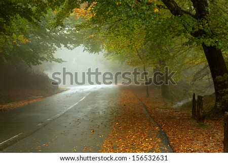 forest road in a foggy day at the portuguese national park - stock photo