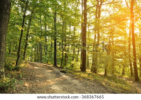 Forest road in a foggy October morning. - stock photo