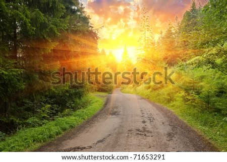 forest road in a rays of sun - stock photo