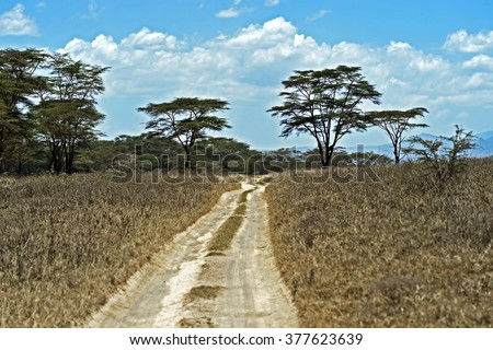 Forest road in the African rainforest Kenya - stock photo