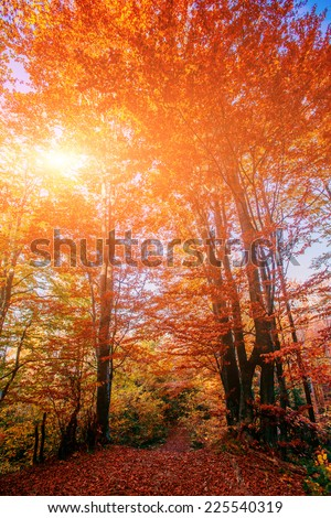 Forest Road in the autumn. Autumn Landscape. - stock photo