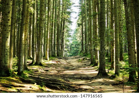 Forest road landscape close-up background - stock photo