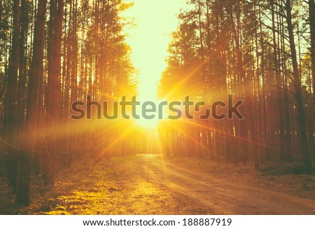 Forest road under sunset sunbeams. Lane running through the autumn deciduous forest at dawn or sunrise. - stock photo
