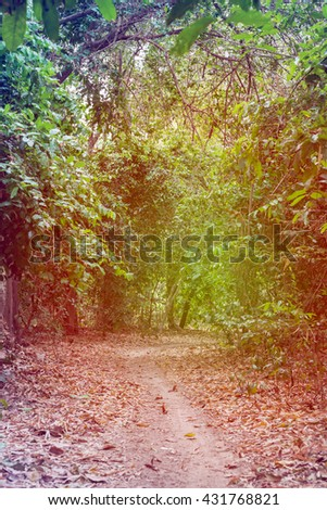 Forest road under sunset, Walkway lane path with green trees in forest - stock photo