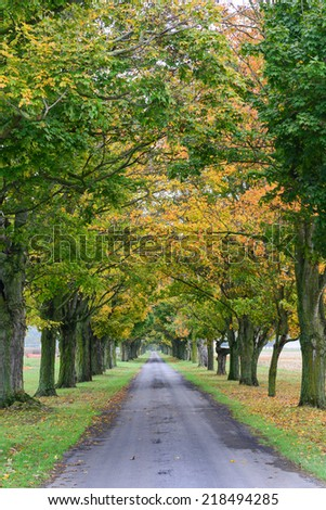 Forest road with autumn foliage  - stock photo