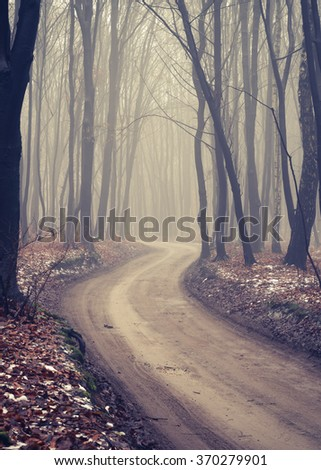 Forest road with dark trees on foggy late autumn day